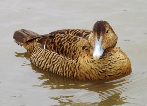 SLIMBRIDGE WWT (16)