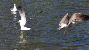 SWANHURST PARK MAY 2013 (154)