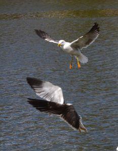 SWANHURST PARK MAY 2013 (166)