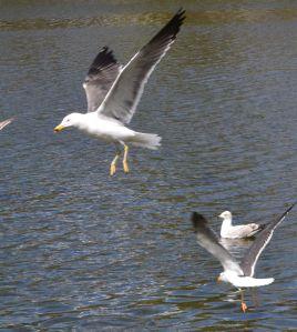 SWANHURST PARK MAY 2013 (172)