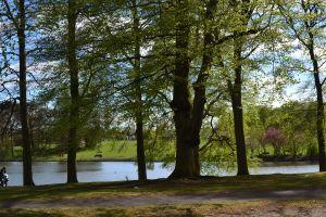 SWANHURST PARK MAY 2013 (514)