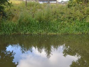 MISC SEPT 2013 - REFLECTIONS (44)