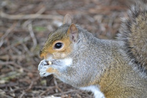 SQUIRRELS (55)