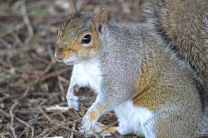 SQUIRRELS (56)