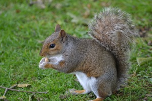 SQUIRRELS (74)