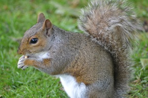 SQUIRRELS (86)