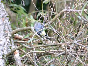 KNNR - BIRDS - SEPT 2015 (124)