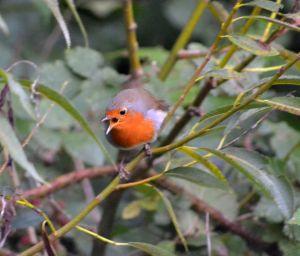 KNNR - BIRDS - SEPT 2015 (171)