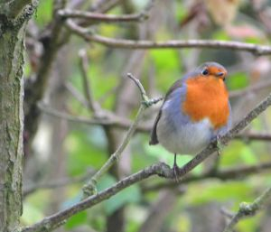 KNNR - BIRDS - SEPT 2015 (182)