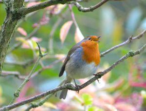 KNNR - BIRDS - SEPT 2015 (203)