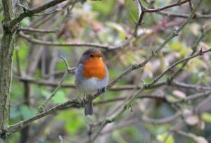 KNNR - BIRDS - SEPT 2015 (247)